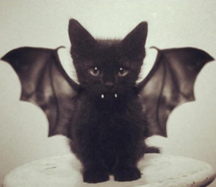 goetia_girls_vapula_witch_pussy_cat_familiar_of_faustus_crow